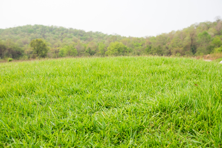 mound slope green grass and mountain Stock Photo