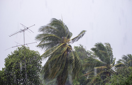 Gust wind storm raining with coconut and antenna pole blown incline