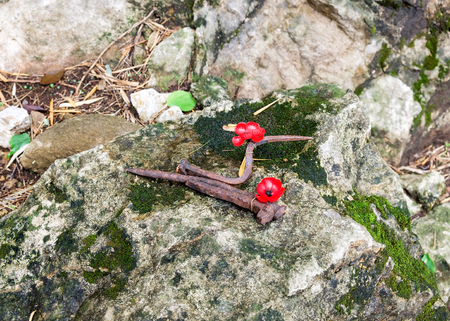 Poppy love red flower with iron hook on stone in forest , to commemorate these brave soldiers and prisoners of war 스톡 콘텐츠
