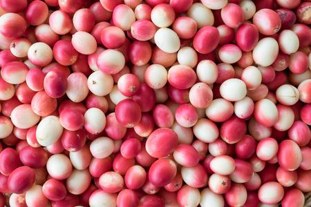 Carissa carandas,Carunda,Karonda seeds ripe colorful texture background