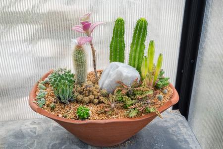 Cactus family plant arrange decor in vase stone