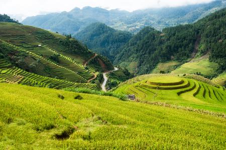 Viewpoint of rice field on terraced landmark of Mu Cang Chai, Yen Bai, Northern Vietnam Stockfoto