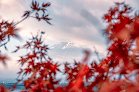 Mount Fuji shy in cloud with blurred maple leaves at Kawaguchiko lake, Japan Stock Photo - 105480150
