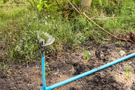 Close-up Sprinkler irrigation watering form blue pipe in the farm for cultivated Stock fotó