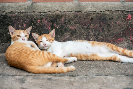 Two young orange kitten lying on wayside