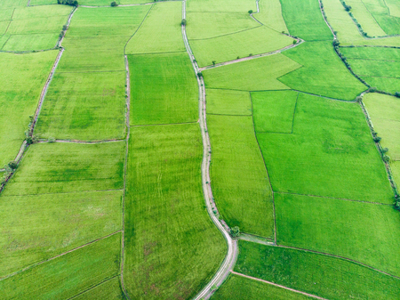 Aerial view of green rice fields with road in countryside Reklamní fotografie