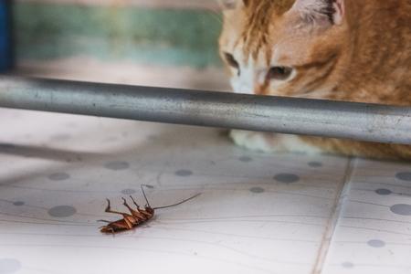 Gouden kat starend naar een kakkerlak onder waslijn Stockfoto