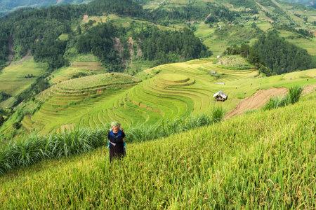 Yen Bai, Vietnam : Sep 07 2017 : Grandmother tribe carried grandson on rice field terraced in Mu Cang Chai Redactioneel