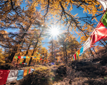 Sunlight shining in golden pine forest with colorful flags prayer flying in valley 版權商用圖片