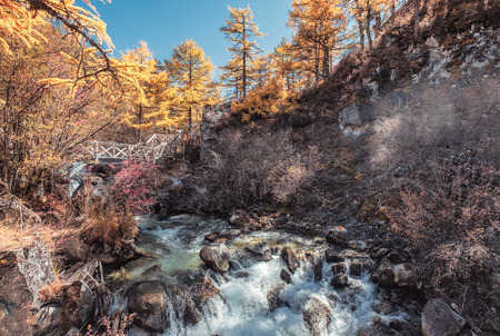 Colorful waterfall in autumn pine forest at Yading nature reserve
