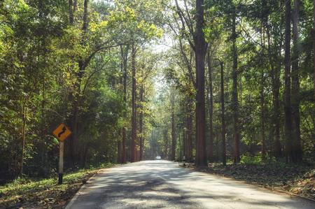 Tropical rainforest with sunlight on asphalt road at national park