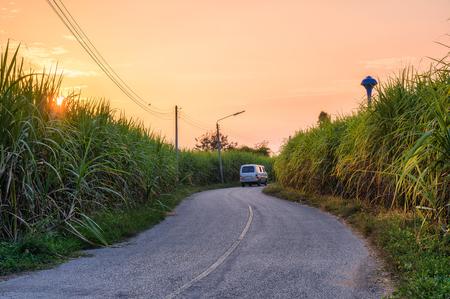 Sunset on sugarcane plantation with van driving on curve asphalt road