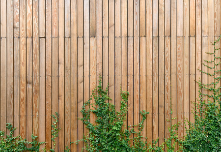 Wooden wall panel with ivy plant Imagens