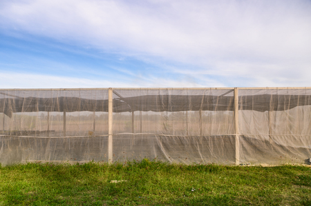 Greenhouse building for cultivated vegetables with blue sky in plantation land Imagens