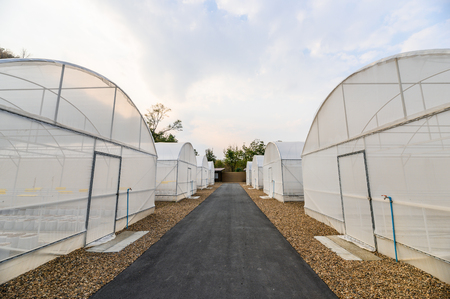 Rows of Greenhouse of cultivation organic vegetables