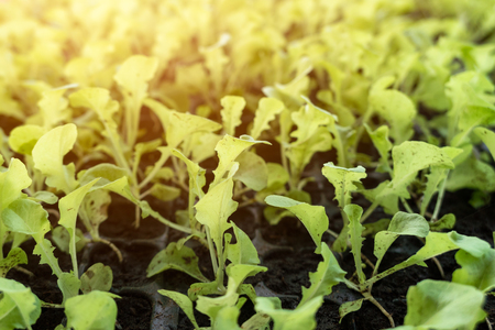 Organic seedling green oak in soil tray Imagens