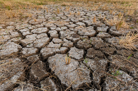 Dry cracked soil ground texture in rice fields Фото со стока
