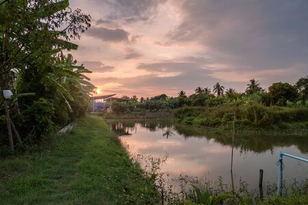 Sunset on planting plantation with pond reflection in countryside