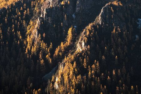 Sunlight on pine trees in autumn forest on the cliff