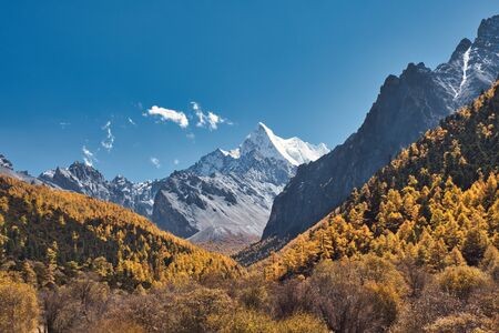 Chana Dorje holy mountain in autumn pine forest at Shangri-la, Yading nature reserve