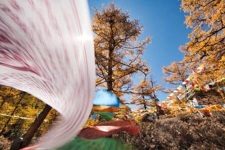 Colorful prayer flags flying in autumn pine forest with blue sky in national park Reklamní fotografie