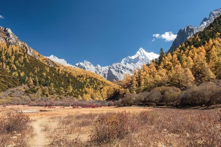 Chana Dorje holy mountain in autumn pine forest on meadow at Shangri-la, Yading nature reserve 스톡 콘텐츠