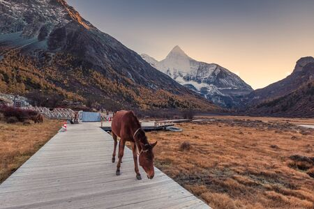 Horse on bridge in meadow with Yangmaiyong holy mountain at sunset. Yading nature reserve