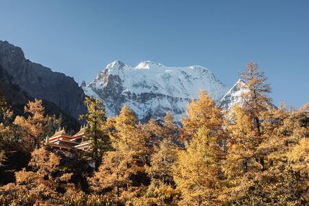Chong Gu monastery in autumn pine forest with mountain range at Yading nature reserve Reklamní fotografie