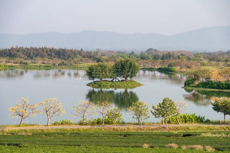Scenery tea plantation with yellow cotton tree with swan in lake Stock Photo