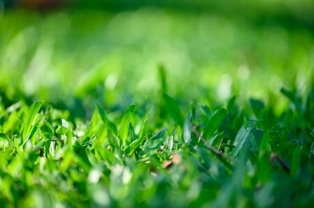 Close-up green leaves on green grass background