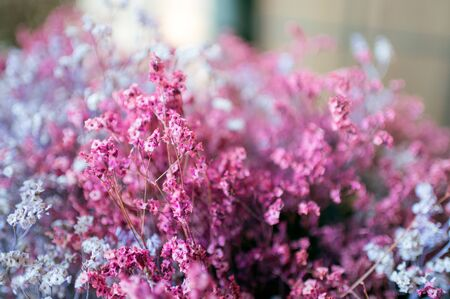 Dried colorful bud flower grass for interior decoration Reklamní fotografie - 134790868