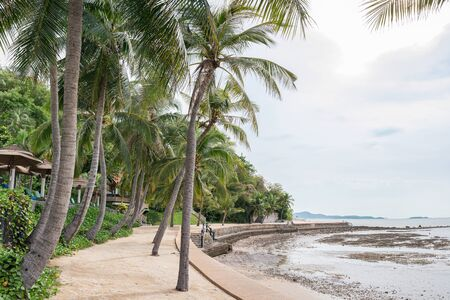 Coconut palm trees on coastline in overcast at Pattaya