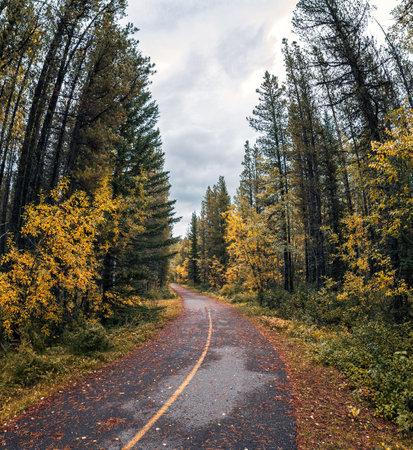 Curved asphalt road in pine forest on autumn at Banff national park