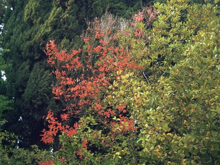 baku: Golden autumn in Baku Botanical Garden.