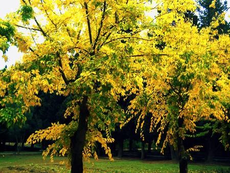botanica:  Golden autumn in Baku Botanical Garden.