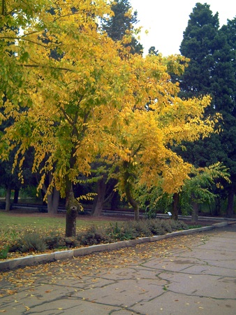 botanica:  Golden autumn in Baku Botanical Garden.  Stock Photo