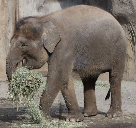 Elephant @ Oregon Zoo, Portland Imagens
