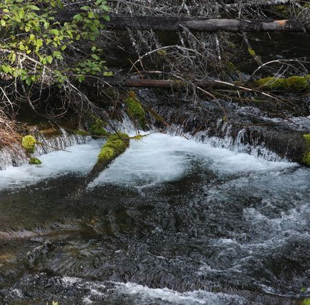 national forest: Arroyo de monta�a en el Monte Hood National Forest  Foto de archivo