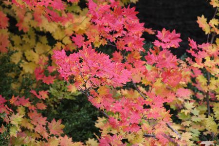 national forest: Los colores de oto�o en el Monte Hood National Forest