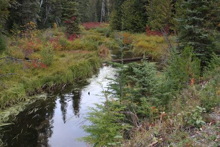 mount hood national forest: Mountain Stream in Mount Hood National Forest Stock Photo