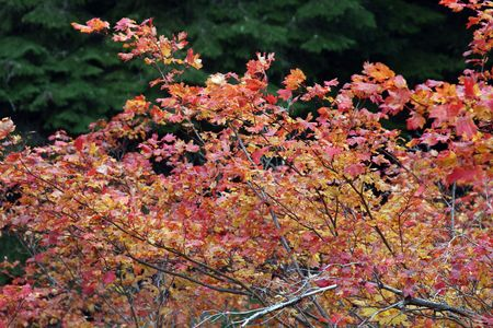 mount hood national forest: Fall Colors in Mount Hood National Forest Stock Photo