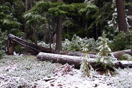 mount hood: Winter in Mount Hood National Forest