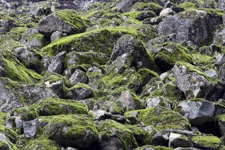 mount hood: Moss Rocks in Mount Hood National Forest