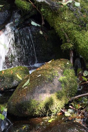 mount hood national forest: Small Waterfall in Mount Hood National Forest