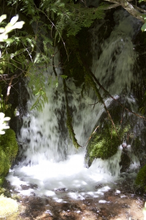 mount hood national forest: Summer Stream - Photo taken on Forest Service road 5830 to Hidden Lake, Mount Hood National Forest, Oregon. Stock Photo