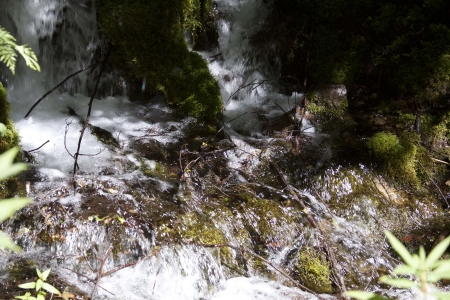 Summer Stream - Photo taken on Forest Service road 5830 to Hidden Lake, Mount Hood National Forest, Oregon. photo