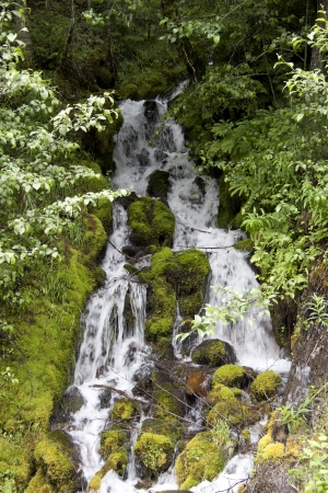 mount hood national forest: Mountain Waterfall Stock Photo