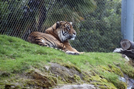 Photo taken at Point Defiance Zoo, Washington. photo