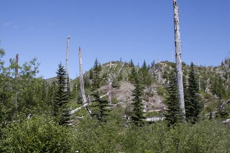 Photo taken at Mount Saint Helens National Volcanic Monument, Washington. Stock Photo - 26771202