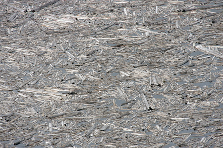 Log Debris in Spirt Lake.  Photo taken in Mount Saint Helens National Volcanic Monument, Washington. Stock Photo